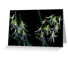 Dockrillia racemosa Greeting Card