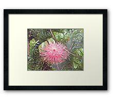 high in sky flower Framed Print