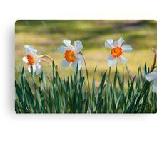 Daffodils Canvas Print