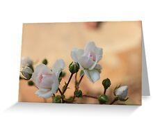 Rose flowers Greeting Card