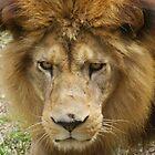 Roar by DES PALMER