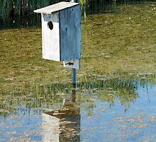 Nesting Box in a Marsh by rhamm