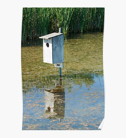 Nesting Box in a Marsh Poster