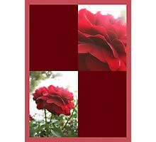Red Rose with Light 1 Blank Q10F0 Photographic Print