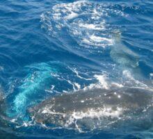 Whales at play, Gold Coast, QLD. Australia Sticker
