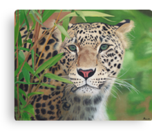 Leopard in the Woods Canvas Print