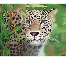Leopard in the Woods Photographic Print