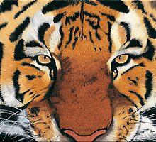 Tiger Portrait by Alina Kaplanov