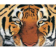 Tiger Portrait Photographic Print
