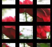 Red Rose with Light 1 Art Rectangles 2 by Christopher Johnson