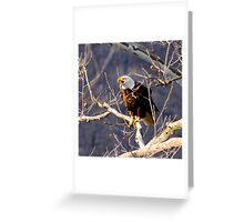MALE CALLING  AT NEST IN SYCAMORE TREE Greeting Card