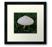 Photography/Digital Art - Mushroom - Color Framed Print