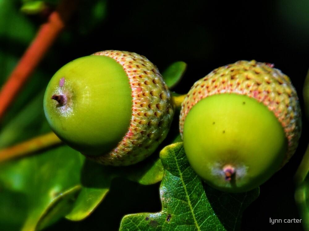 Twin Acorns by lynn carter