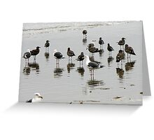 BIRD REFLECTION 1 Greeting Card