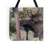Looking guilty Tote Bag