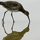 BIRD REFLECTION 4 by Rebecca Dru