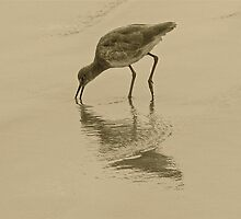 BIRD REFLECTION 6 by Rebecca Dru