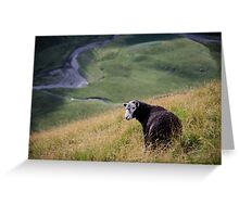 Sheepish, Lake District National Park Greeting Card