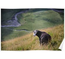 Sheepish, Lake District National Park Poster