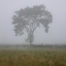 A Tree Through The Fog by Mikell Herrick