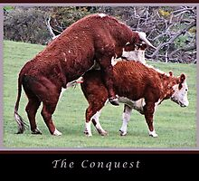 The Courtship, The Conquest and The Disappointment. by Maree Cardinale