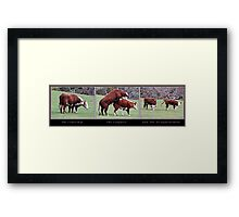 The Courtship, The Conquest and The Disappointment. Framed Print