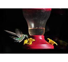 Humming Bird Feeder Photographic Print