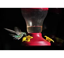 Humming Bird Feeder Photographic Print