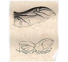 Rhinoceros Beetle Detail Poster