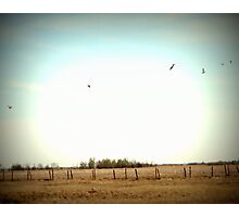 Geese on the Prairies Photographic Print
