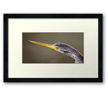 A Darter Looking For Lunch Framed Print