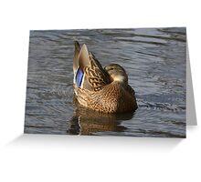 Mallard Duck Hen Greeting Card