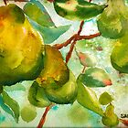Pear Season by Sally Griffin