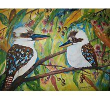 Kookaburra Conversation Photographic Print