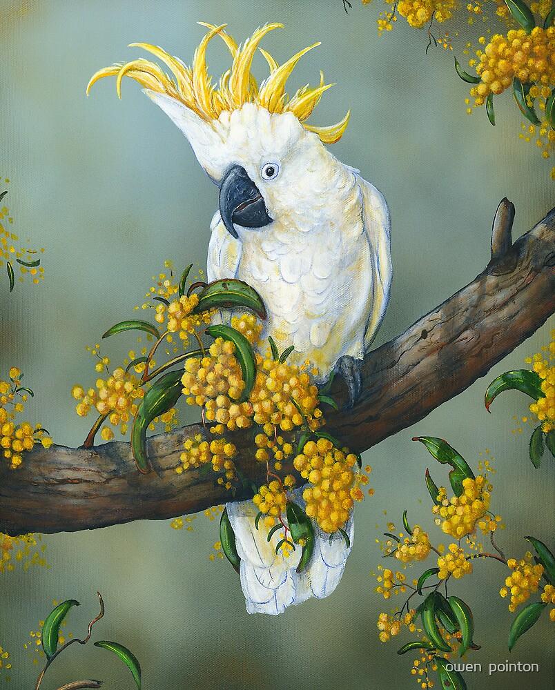 Australian White Cockatoo  by owen  pointon