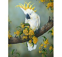 Australian White Cockatoo  Photographic Print