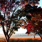 Autumn Sunrise in the Barossa by jwwallace