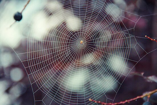 Oh what a tangled web we weave... by Laura-Lise Wong