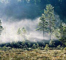 5.9.2013: September Morning III by Petri Volanen
