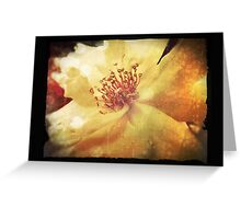 Antique Look Yellow Flower in Summer Sun Greeting Card