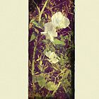 Antique Look Print of Pretty Sweet Pea flowers by pastpresent