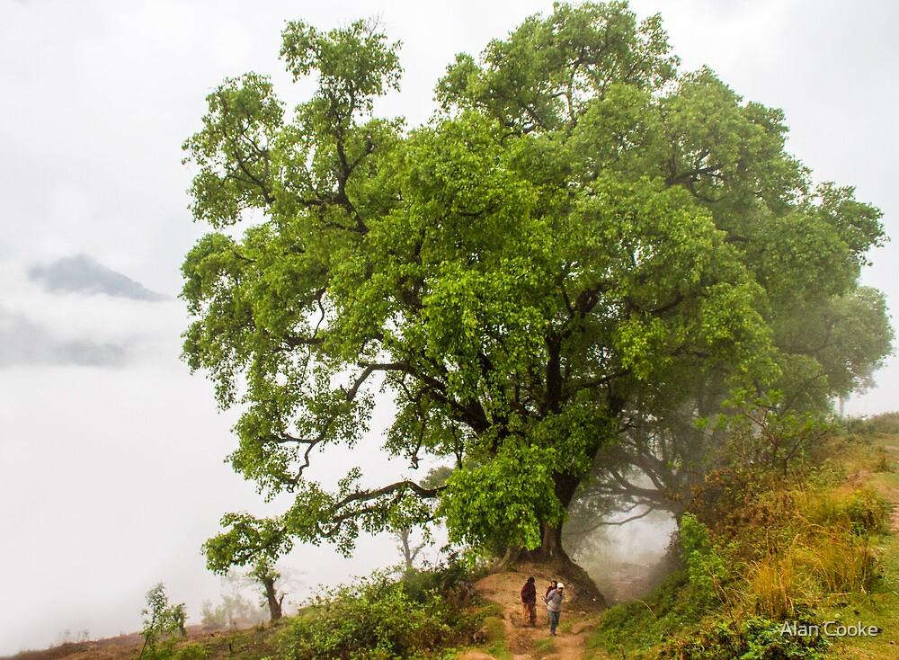 Bandipur Tree by Alan Robert Cooke