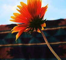 Blanket Flower by © Betty E Duncan ~ Blue Mountain Blessings Photography