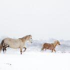 Horse's in Snow by Heidi Stewart