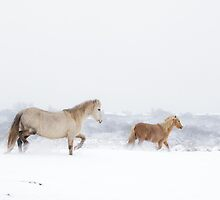Horse's in Snow by Heidi Stewart