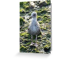 Seaside sit down Greeting Card