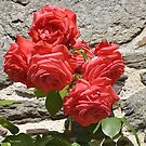 The rose and the wall/Soft and hard by karo