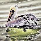 Pelican by venny