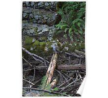 Daytime Owl Poster
