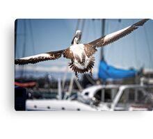 Pelican's successful lift off (in Batemans Bay/NSW/Australia) Metal Print